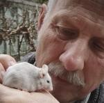 Mäuse im Rampenlicht der Zoologie